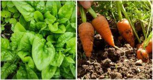 15 verduras que puedes cultivar y cosechar en sólo un mes