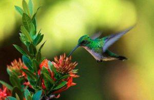 Cuando veas un colibrí, un alma amada te vino a visitar