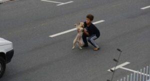 Un niño de 11 años salva a perrito de ser atropellado