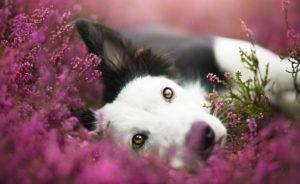 La misión espiritual que tiene un perro en nuestra vida