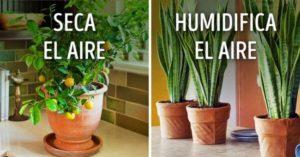 10 Plantas para tener un microclima perfecto en casa