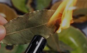 Asombroso truco: Quema hojas de laurel en tu casa, ¿la razón? Nunca lo dejarás de hacer