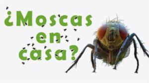 Dile adiós a los insectos con una fórmula casera y en tan sólo 1 hora